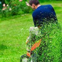 灌木类苗木移栽掌握修剪方法